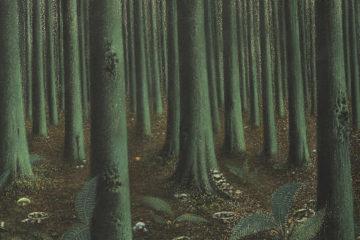 Interior de bosque